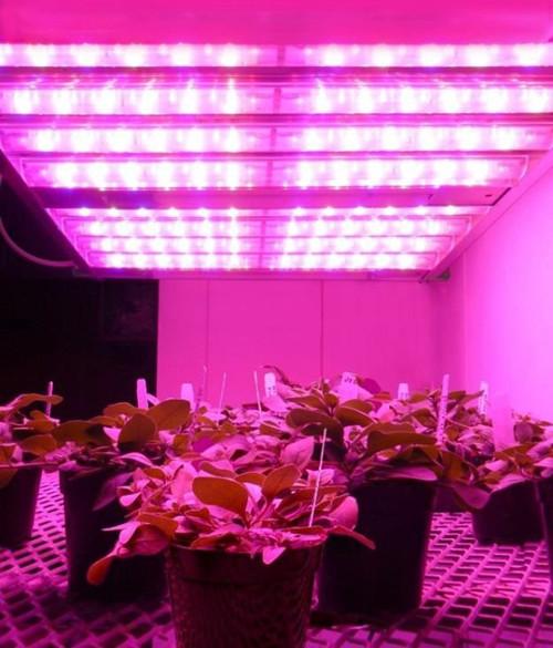 【新闻稿配图】欧司朗Horticulture Growlight植物种植照明解决方案_副本